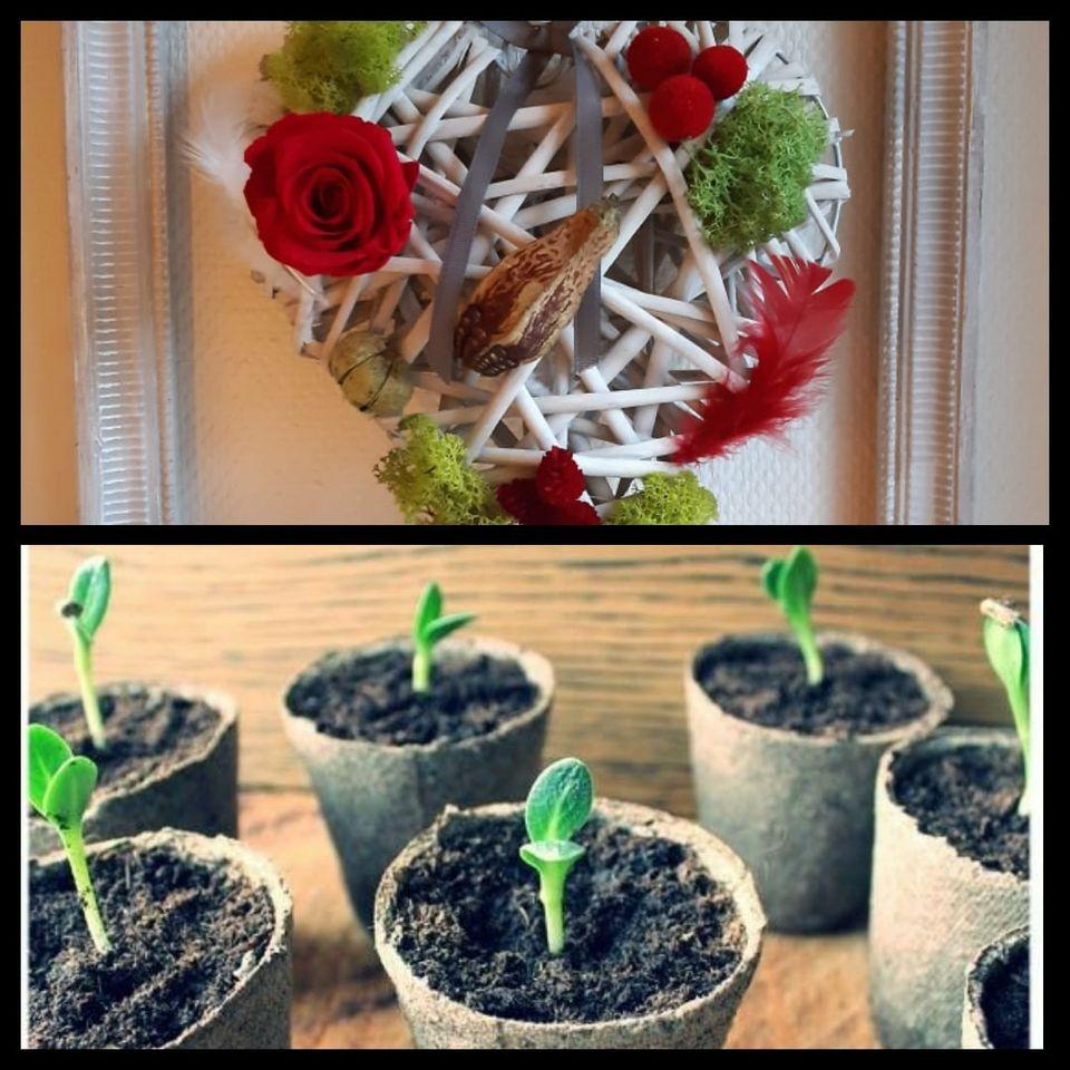 atelier_vegetal_semis